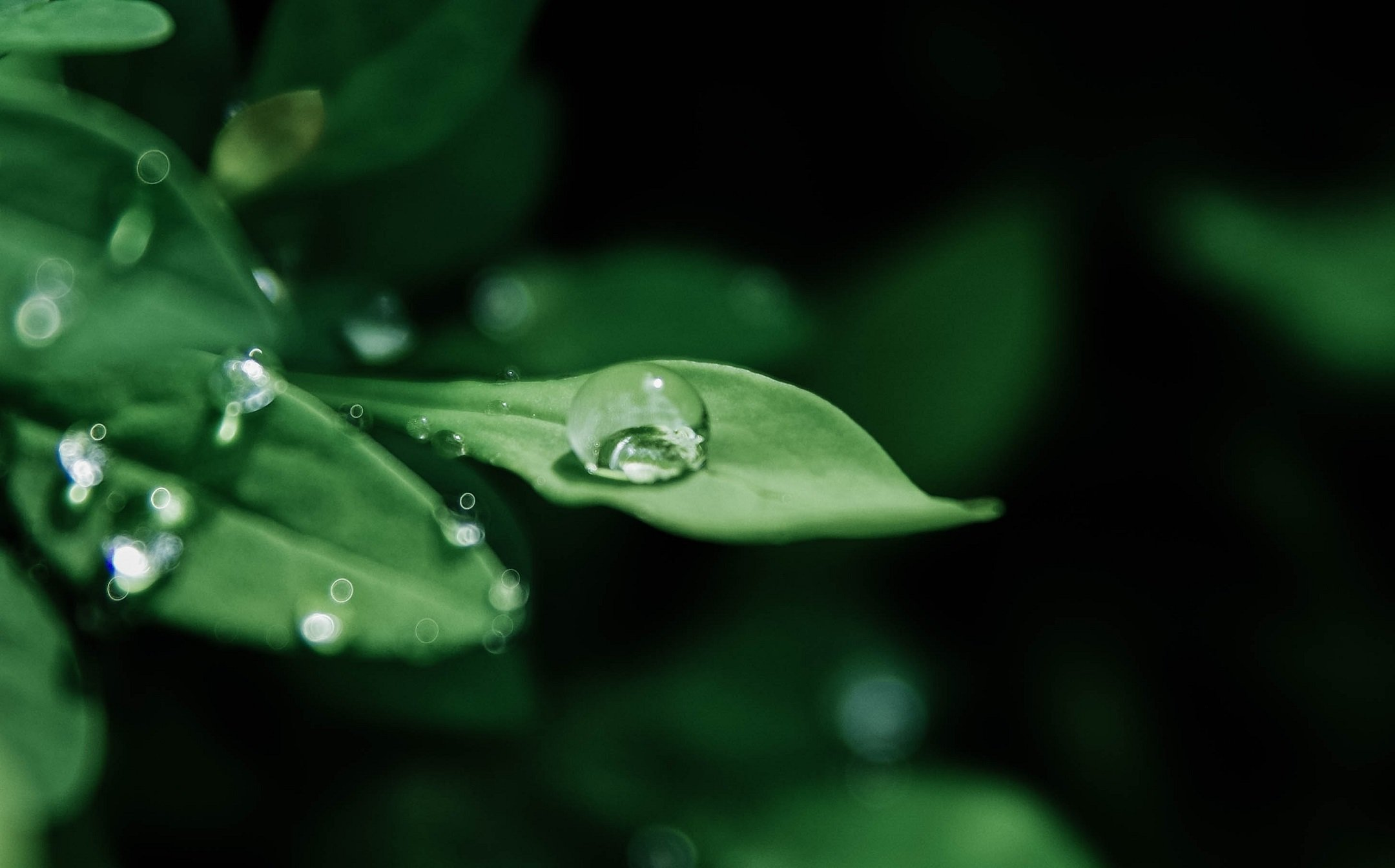 Hyperrealistic Visualizations: Water Drops on Leaves